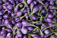 Many ripe eggplants