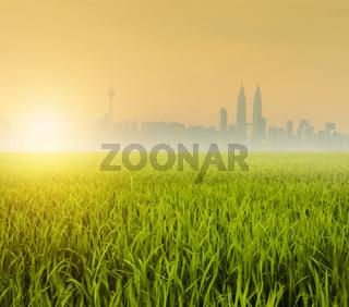 Kuala Lumpur over paddy field