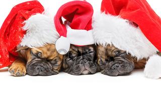 puppies sleeping in christmas hats