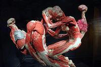Präparat, Plastinat, umschlungenes Paar,  Menschen Museum, Berli