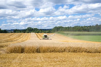 Harvesting of a grain field