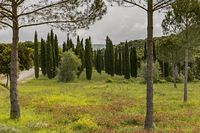 Landscape in the Barolo area
