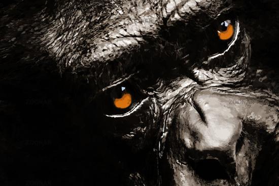 chimpanzee / illustration