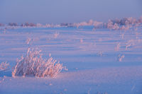 Rural winter landscape of meadow under snow at early morning time