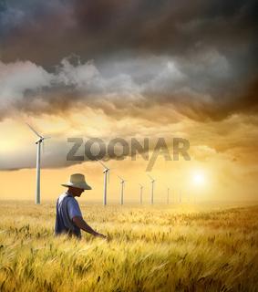 Farmer checking his crop of wheat