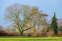 A row of different trees in winter in sunshine