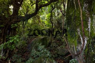 Inside the atlantic rainforest