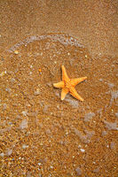SEa star in the water on the edge of sea and land