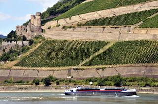 Burgruine Ehrenfels bei Assmannshausen, UNESCO Welterbe Kulturlandschaft Oberes Mittelrheintal, Weltkulturerbe, Hessen, Deutschland, Europa