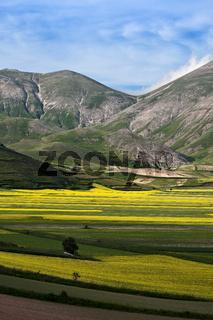 The plain of Castelluccio