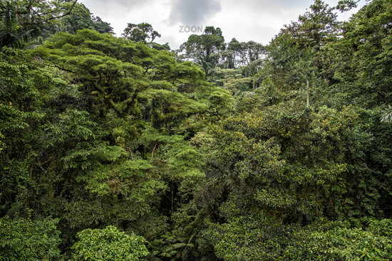 jungle in central america