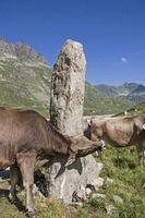 Needle-like rock in the Silvretta