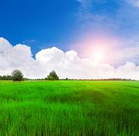 beautiful green field