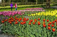 Blumenbeete mit holländische Tulpen