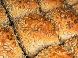 Closeup of freshly made sunflower seed buns, side by side, on a tray at close-up