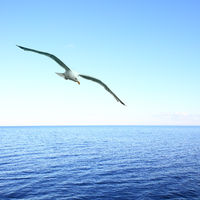 Soaring seagull over sea
