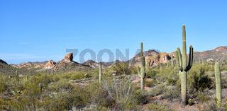 Arizona Desert Landscape
