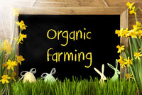 Sunny Narcissus, Easter Egg, Bunny, Text Organic Farming