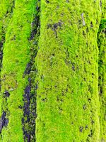 Moss on stump in the forest