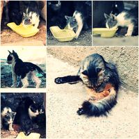Feral Cats live outdoors and needs adoption collage toned image set