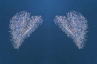 two frozen ice hearts on a window