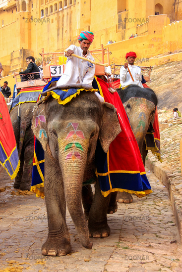 Decorated elephants going on the cobblestone path from Amber Fort near Jaipur, Rajasthan, India
