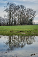 A row of trees is reflected in a puddle.