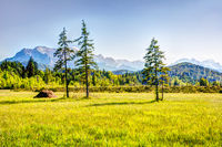 Meadow in the alps of Bavaria
