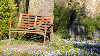idyllic place, bench and spring meadow