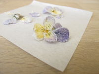 Candied horned pansy