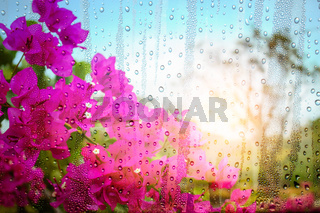 flowers and drops of water on glass.