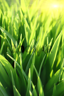 green grass and sun beams