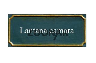 schild Wandelroeschen,Lantana camara