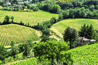 Vineyards near the city of Montepulciano