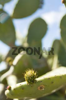 Cactus over blue sky