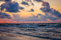 Seagulls flying over the sea beach at sunset