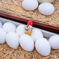white eggs close up