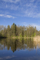 Pond at Moosham in Upper Bavaria