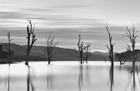 Steadfast trees emerge from the lakes waters.