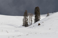 dangerous weather situation... Lamar Valley *Yellowstone National Park, USA*