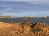 autumn landscape at the rootless cones at Myvatn Lake, Iceland