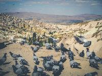 pigeons in rural mountain landscape, cappadocia, Turkey -