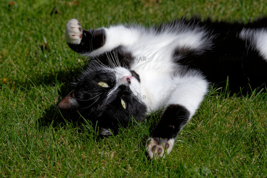 young cat playing on the meadow