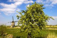 Frühlingslandschaft mit Holländischer Windmühle