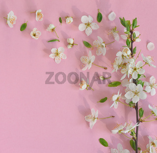 Spring flowers on pink background