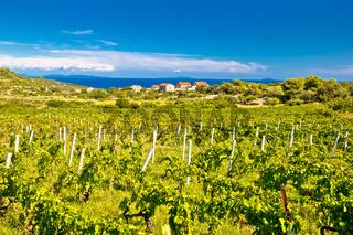 Island of Vis vineyards panorama