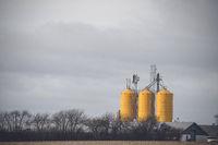 Yellow silos at a farm