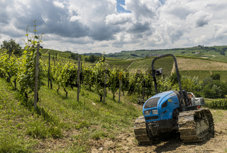 Vineyards with Tractor of Garbelletto Piedmont