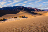 The  morning over sand dunes