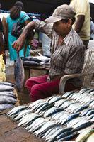 Fish market - Negombo, Sri Lanka